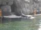 Galeria zoo opole nr3