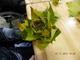 Galeria jesienne liście-warsztaty