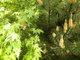 Galeria Majowo w ogrodzie