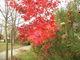 Galeria Jesiennie...